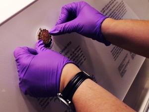 Mains qui placent des pièces de monnaie dans une plaquette