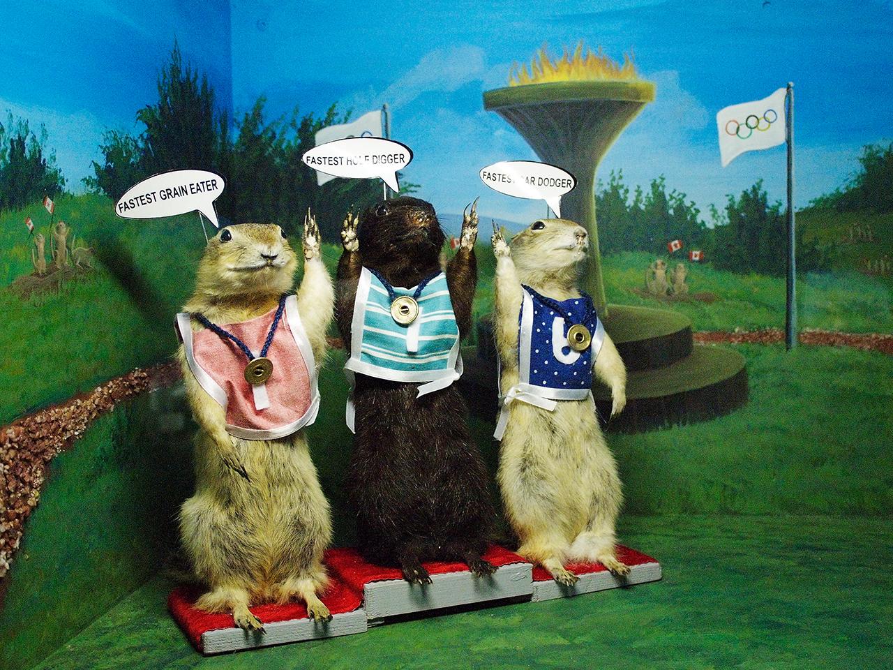 trois gauphres sur un podium olympique