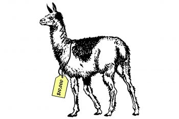 Illustration d'un lama avec une étiquette de prix à son cou sur laquelle on lit « 10 000 $ ».