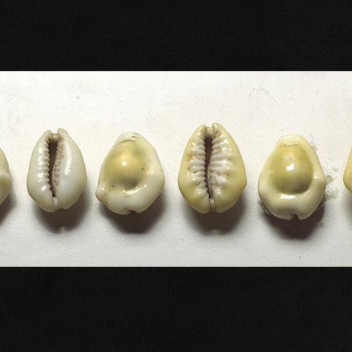 Petits cauris jaunes et blancs de forme ovale.