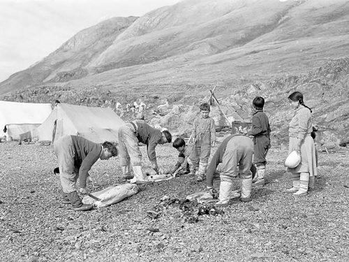 Photo en noir et blanc d'un groupe de chasseurs inuits préparant des carcasses de phoques.